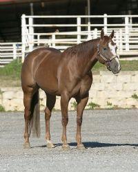 Horses for <b>Sale</b>